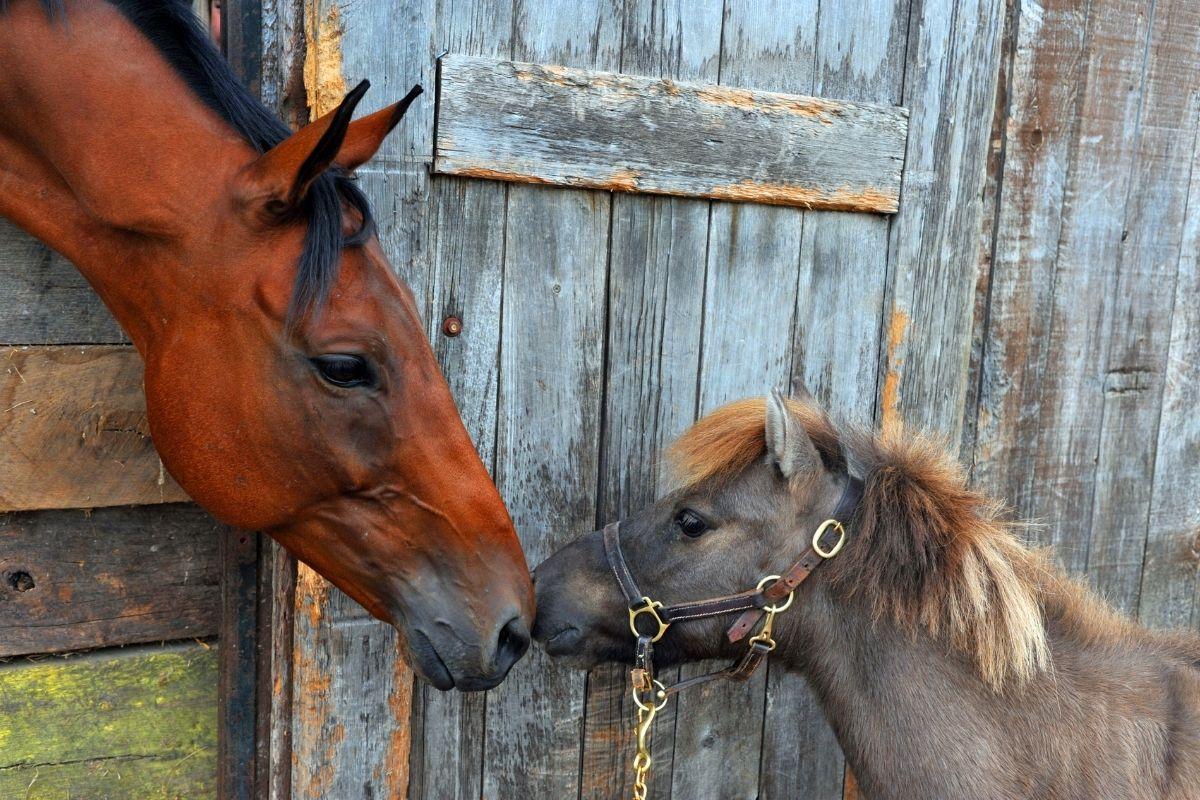 Hvad kan vi laere af at kommunikere med dyr